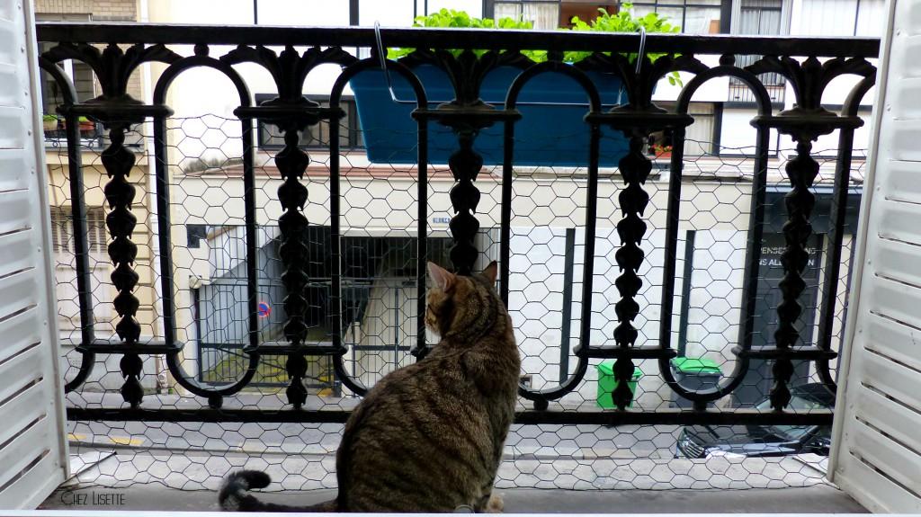grillage-chat-chez-lisette